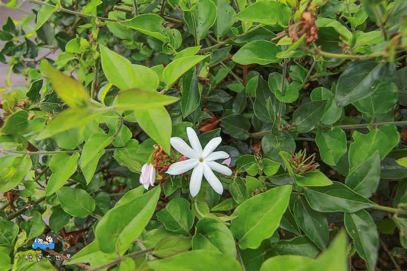 花壇景點 033