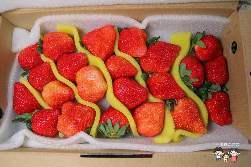 彰化草莓 003