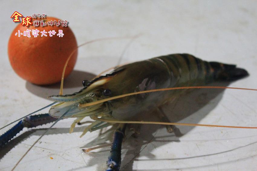 釣蝦 028