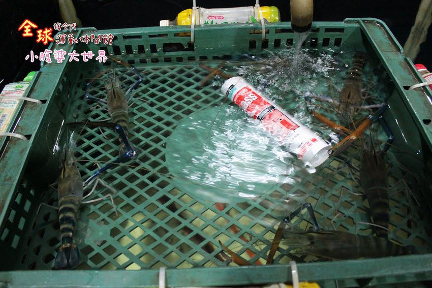 釣蝦 033