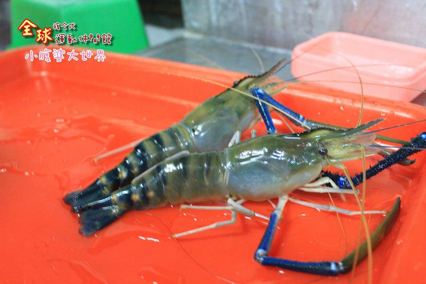 釣蝦 040