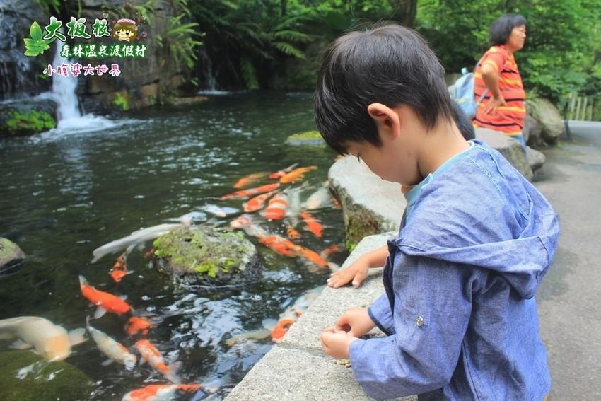 大板根森林溫泉渡假村 017.jpg