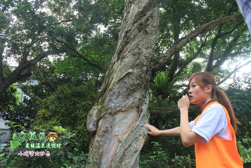 大板根森林溫泉渡假村 022.jpg