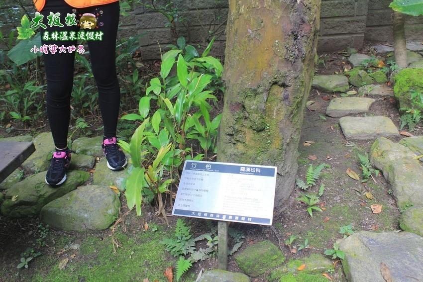 大板根森林溫泉渡假村 018.jpg