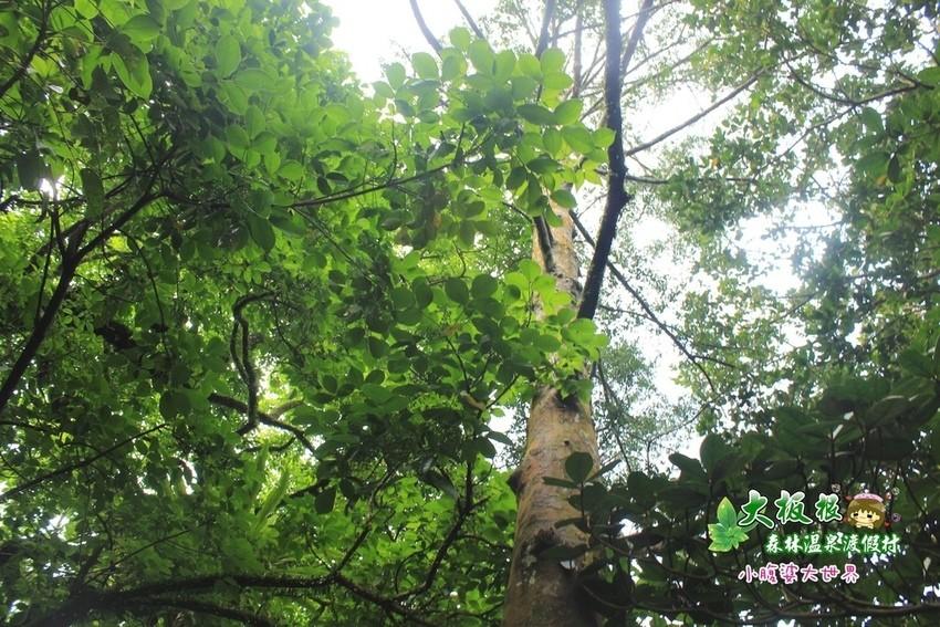 大板根森林溫泉渡假村 019.jpg