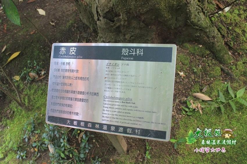 大板根森林溫泉渡假村 020.jpg