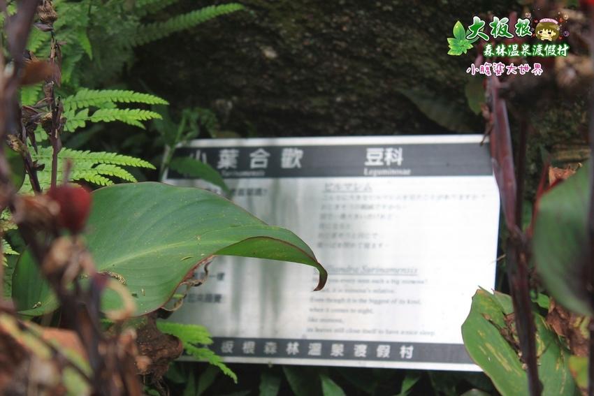 大板根森林溫泉渡假村 023.jpg