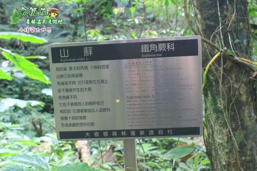 大板根森林溫泉渡假村 026.jpg