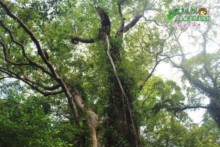 大板根森林溫泉渡假村 029.jpg