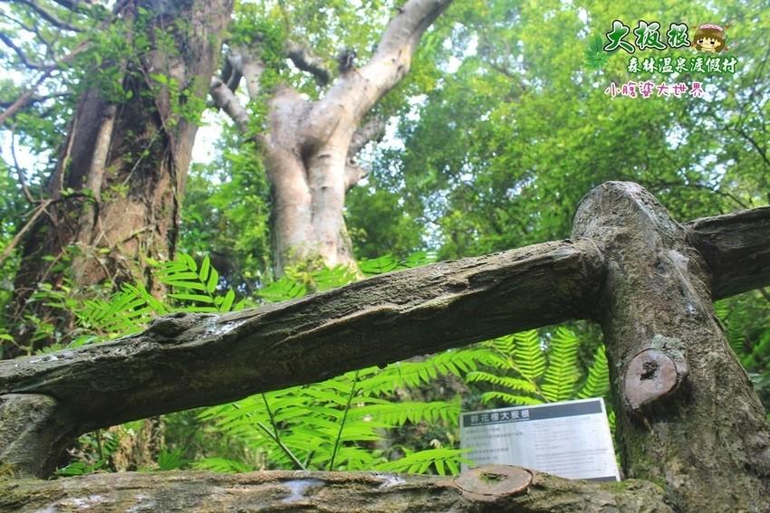 大板根森林溫泉渡假村 030.jpg