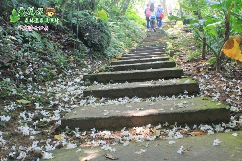 大板根森林溫泉渡假村 038.jpg