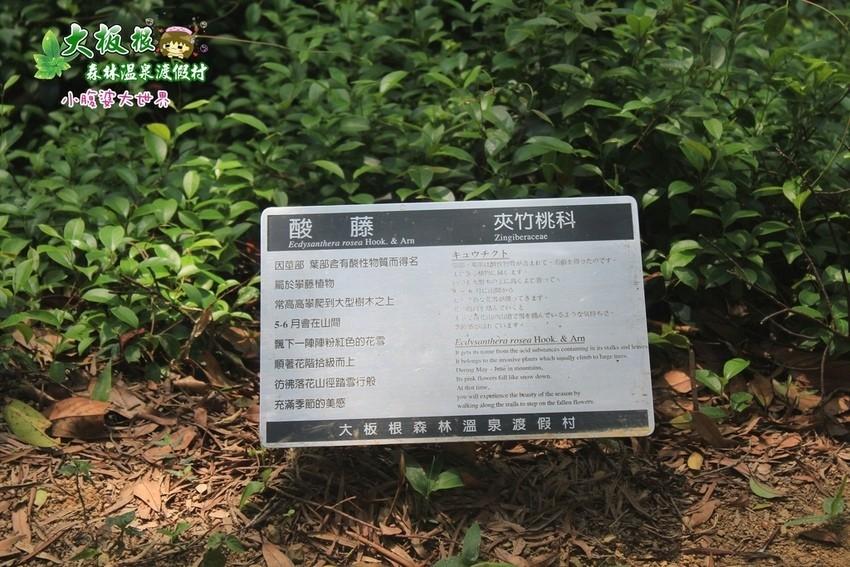 大板根森林溫泉渡假村 044.jpg