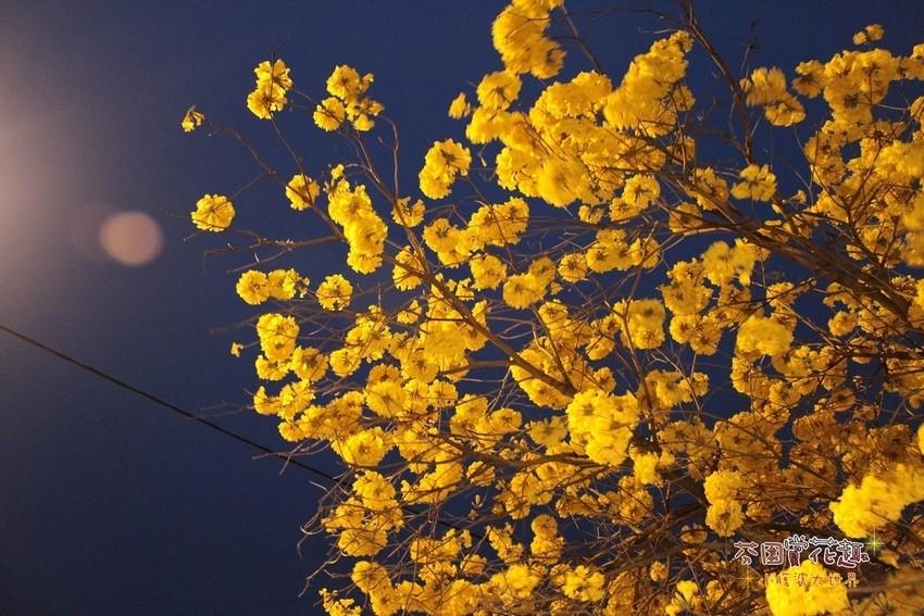 【彰化一日遊行程】芬園一日遊,爆炸的黃鈴木,在地人推薦行程小吃美食,有吃又有得玩!! @小腹婆大世界