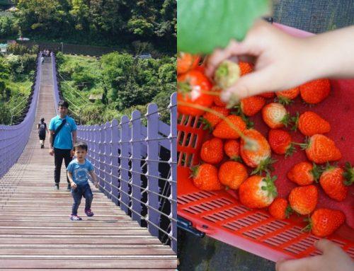 台北採草莓一日遊攻略 內湖採草莓、吃草莓冰、雙心池、愛心花田、白石湖吊橋、必吃居和熹小籠包