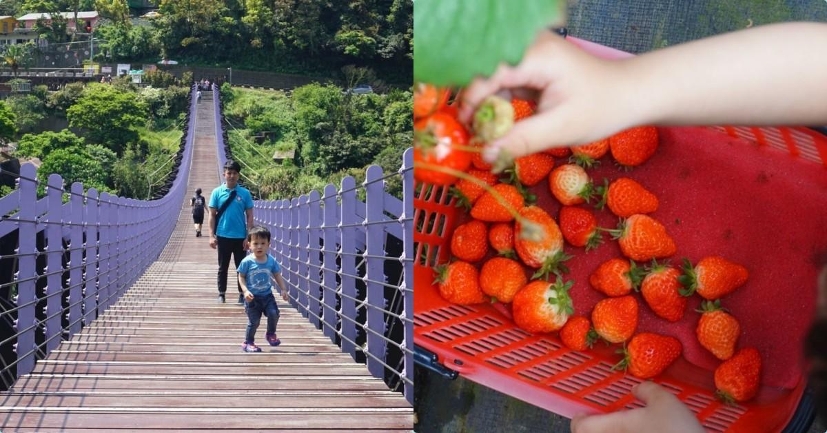 台北採草莓一日遊攻略|內湖採草莓、吃草莓冰、雙心池、愛心花田、白石湖吊橋、必吃居和熹小籠包 @小腹婆大世界