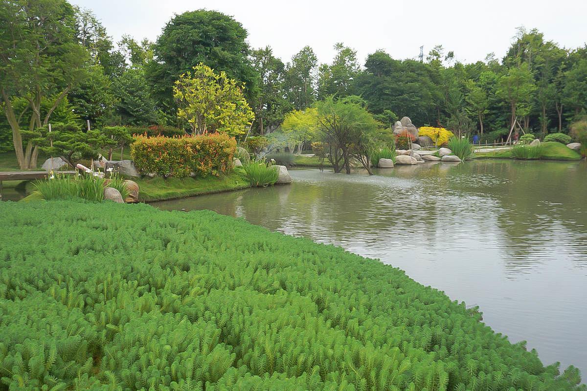 雲林虎尾景點》雲林版兼六園!澄霖沉香味道森林館,免門票日式庭院,愛心森林,還可以玩沙和餵魚