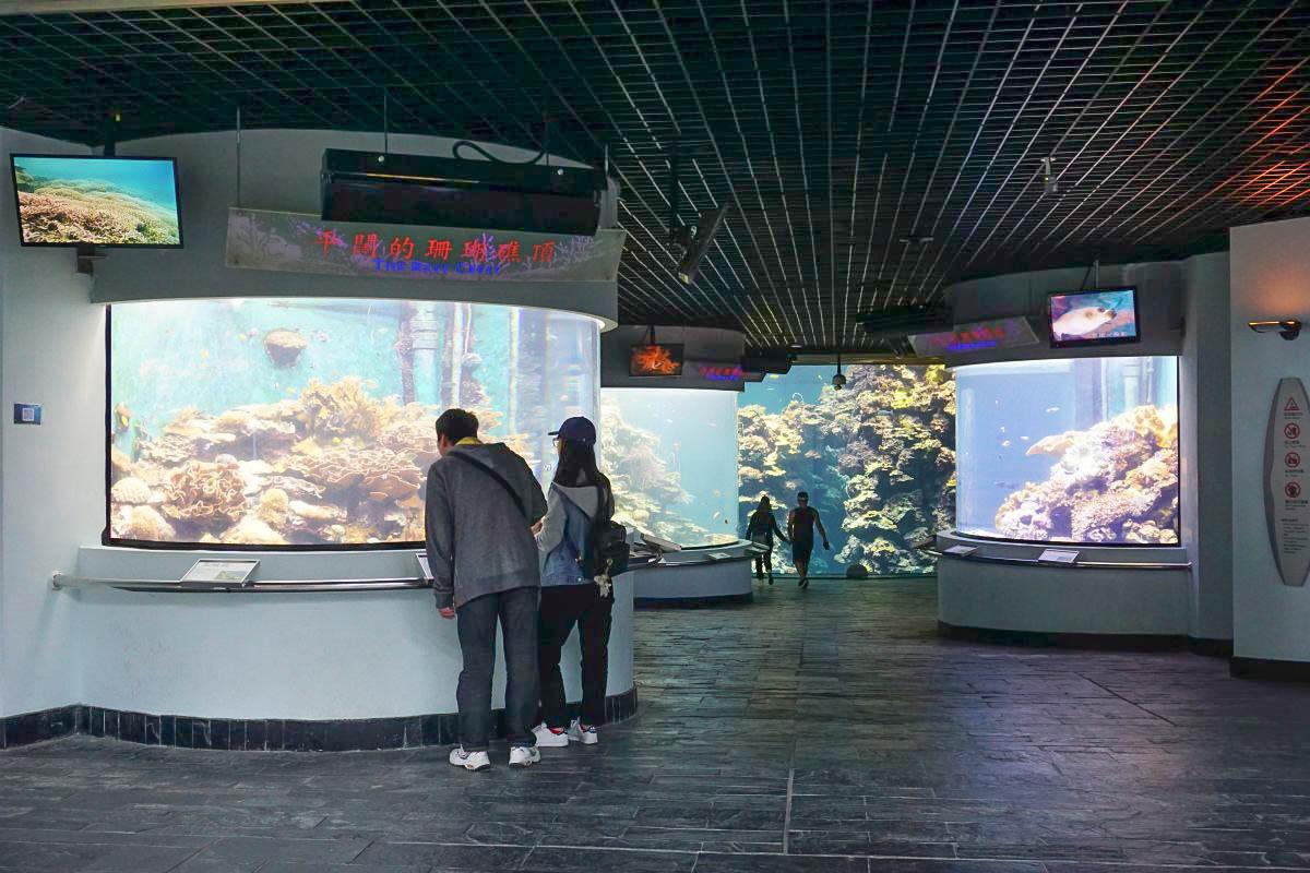 屏東親子景點|海生館(國立海洋生物博物館)|進入美麗海底隧道、戲水池、夜宿海生館、可愛的小白鯨小企鵝~巨藻林好震撼!和鯊魚一起夜宿~
