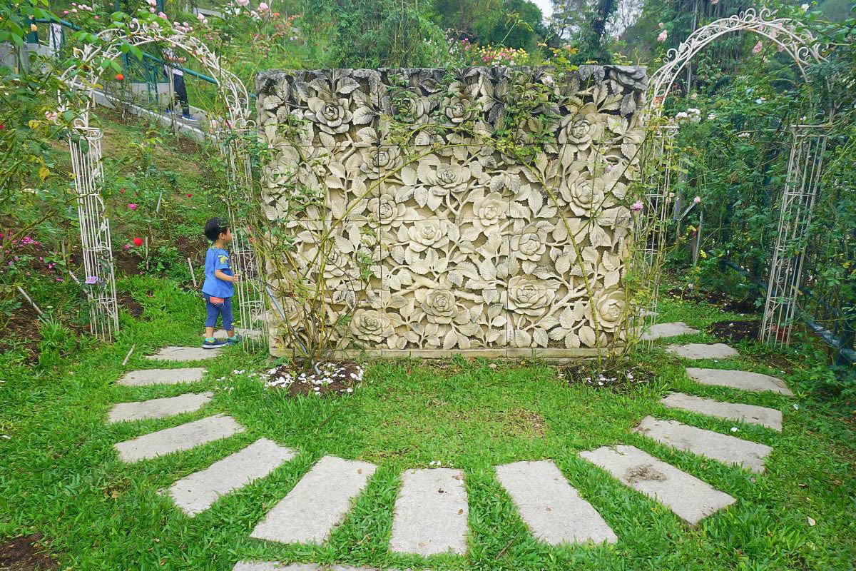 苗栗頭屋景點~雅聞七里香玫瑰森林 免門票~萬朵玫瑰盛開:玫瑰森林、愛心步道、歐式噴泉、森林玻璃屋,一年四季都開花~