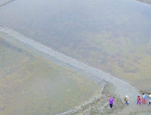 嘉義IG秘境~洲南鹽場 小摩西分海、走在鹽田中央(藍天、倒影、水池),變身小小鹽工的免費景點,小朋友玩翻了!