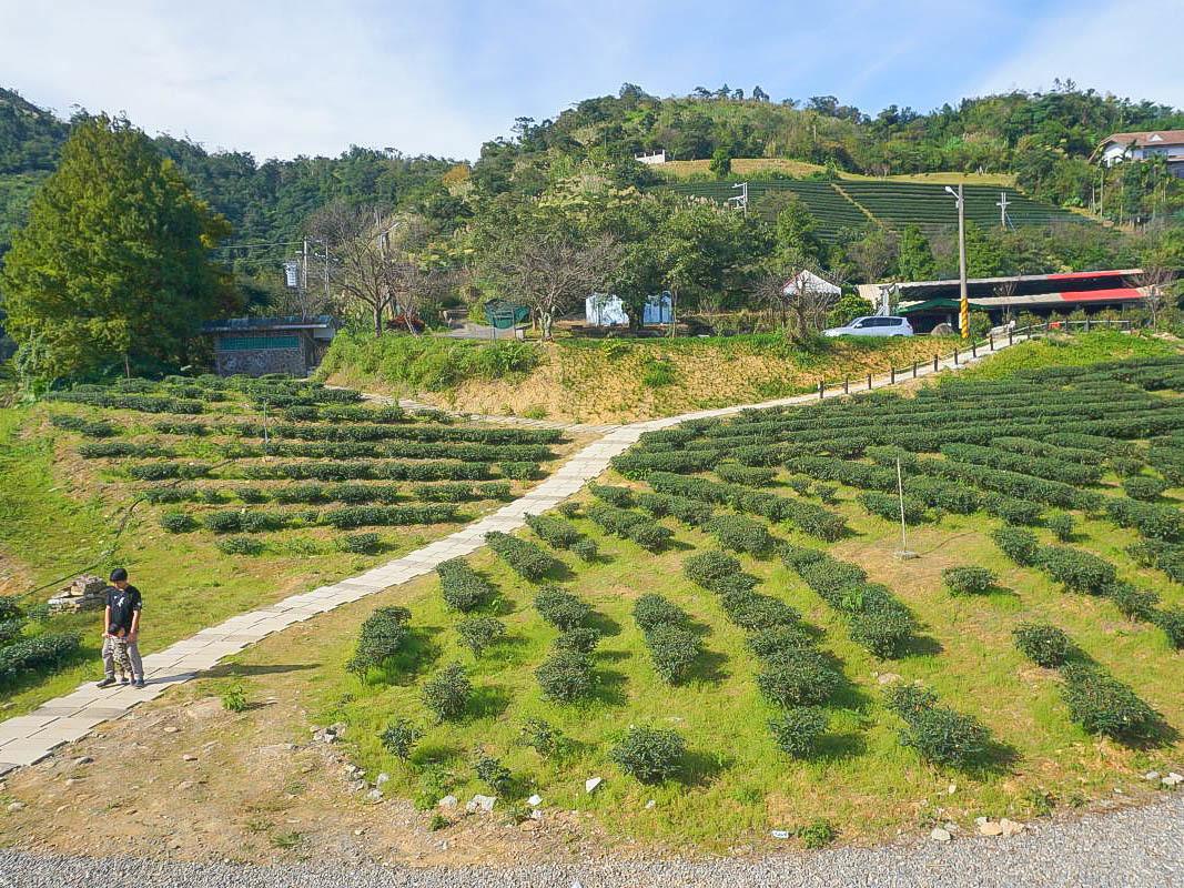 宜蘭景點:玉蘭茶園~超美至高點,超美觀景亭俯瞰山脈宛如仙境,一起踏入小迷宮的茶樹路徑吧!超放鬆的賞茶景點,必吃現炒山菜~
