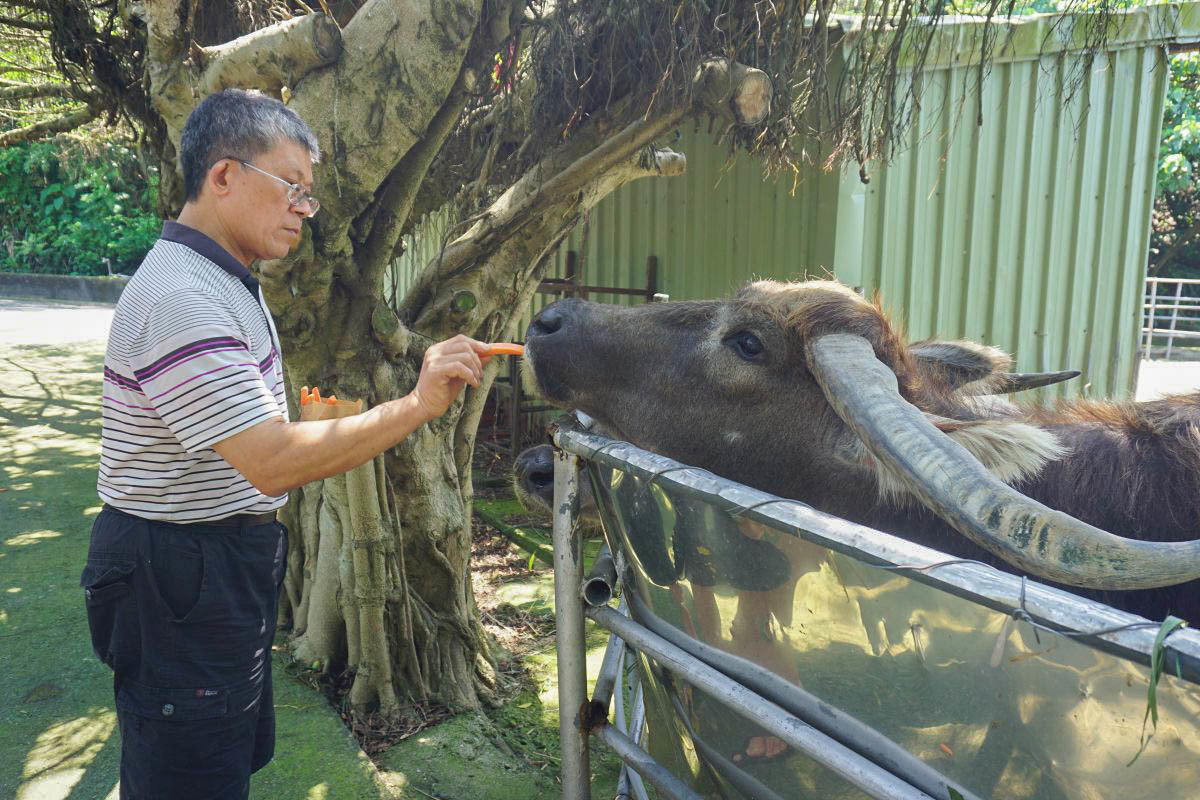 新北景點|台灣山豬城:免門票,隱藏版可愛動物園有十多種可愛小動物,還有CP高的好吃台菜!(菜單.價位)