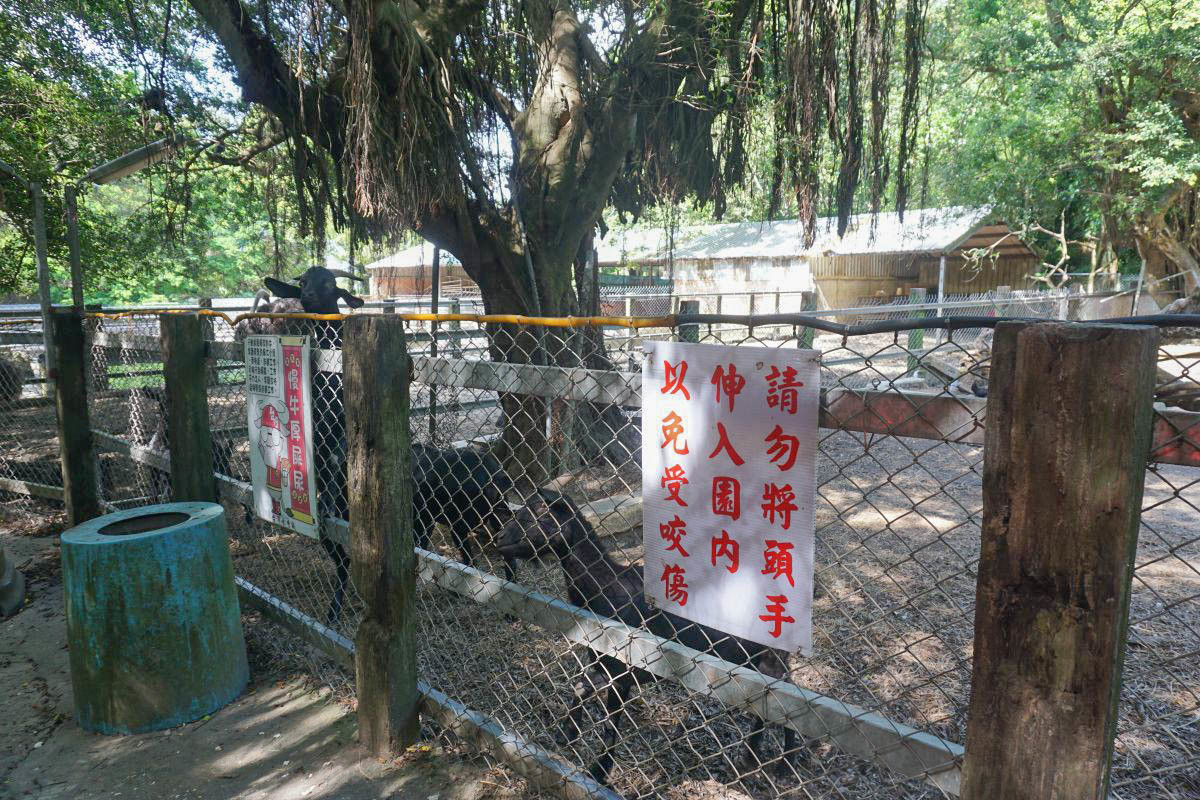 苗栗景點》台灣水牛城~免費景點,烤肉吃到飽、迷你動物園、小火車、玩水、溜滑梯、大草皮,可以玩一整天~
