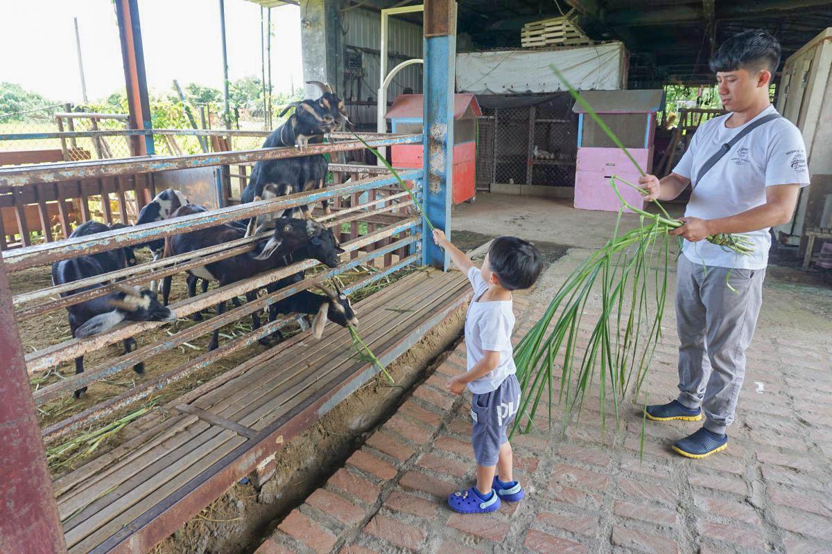 宜蘭親子景點》可達羊場:免門票!餵可愛小動物一次滿足,餵小羊喝奶、小白兔吃紅蘿蔔、跟咕咕雞賽跑、餵可愛小小鴨~愛小動物的小朋友出發!