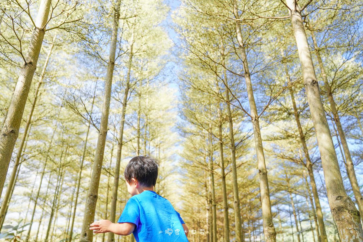彰化田尾《小葉欖仁森林:冬季戀歌場景登場!免費超夢幻秘境森林,一秒飛雪國,IG網美打卡熱門景點,隨便拍都好看,浪漫爆炸!