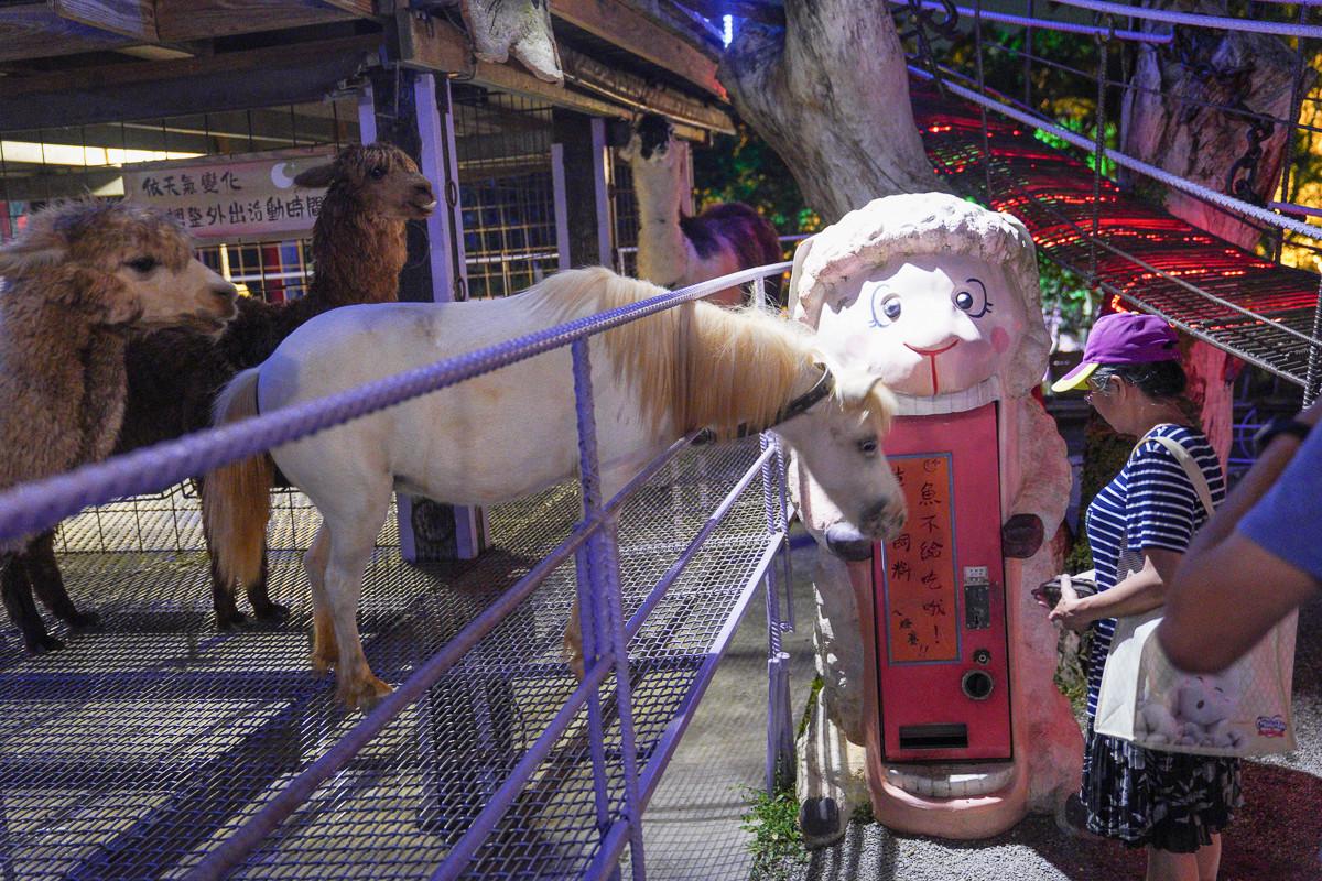 南投景點》星月天空-猴探井景觀餐廳~夜間動物園、百萬夜景景觀餐廳!小朋友最喜歡的溜滑梯、迷你動物園,假日駐唱表演~
