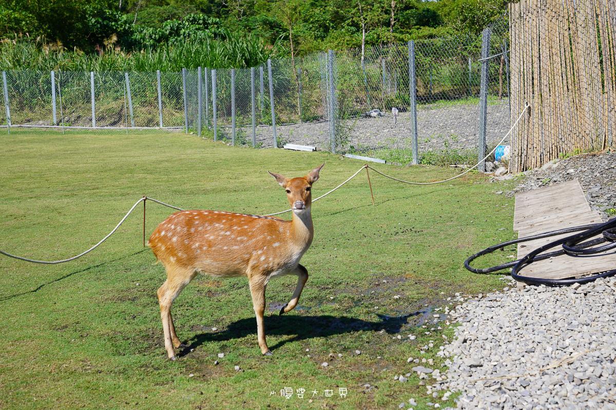 宜蘭冬山景點》斑比山丘📍被山環抱的小鹿咖啡廳~台灣版小奈良餵梅花鹿吃紅蘿蔔,被小鹿們包圍餵食好緊張,超美環山小山丘~