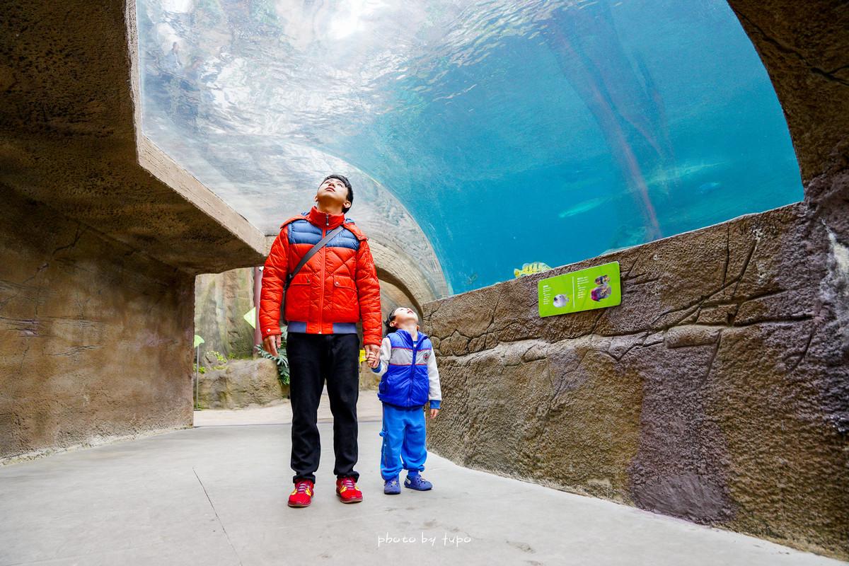 台北新景點》臺北市立動物園/木柵動物園新館(穿山甲館)開放囉!熱帶雨林森林、海底隧道、大眼猴山洞、S型天空森林步道,可愛的大眼猴、樹懶、熱帶魚一次滿足。