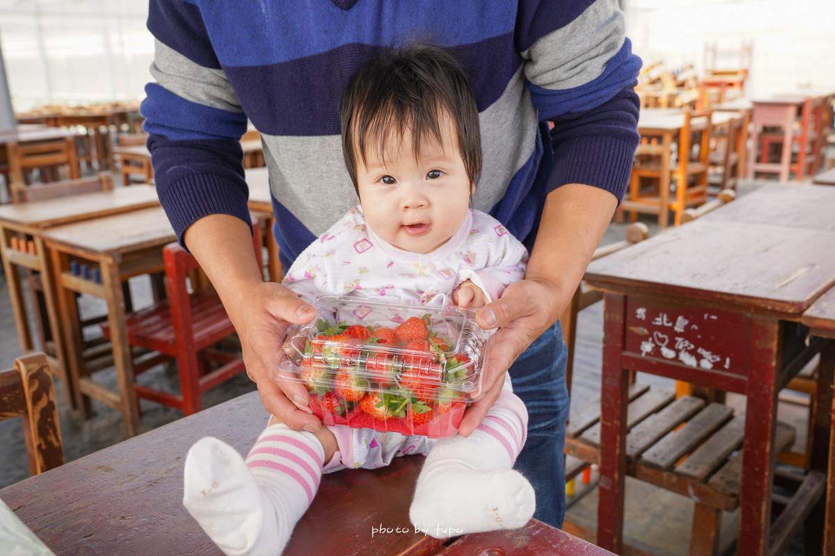 彰化新親子景點》樂採果溫室觀光農場,免門票免預約,控窯草莓DIY,愛心盪鞦韆、彩虹溜滑梯、積木,一日雙果採草莓草番茄去~