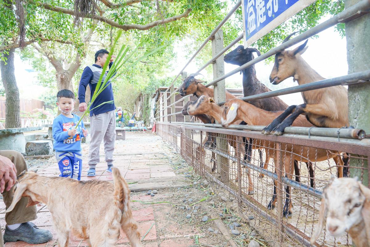 台中餵羊去》益健乳羊牧場,免門票!市區內隱藏版迷你動物園,餵羊餵豬,超佛心一大桶飼料只要20元!