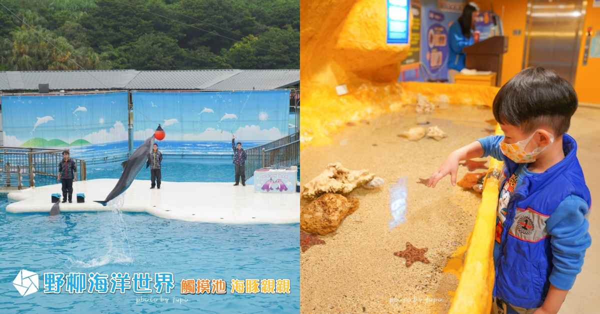 即時熱門文章:北台灣必遊親子景點「野柳海洋世界」: 超可愛海豚表演🐳、海獅生態、高空跳水、刺激的海底隧道探險~生態池摸摸海星去⭐~