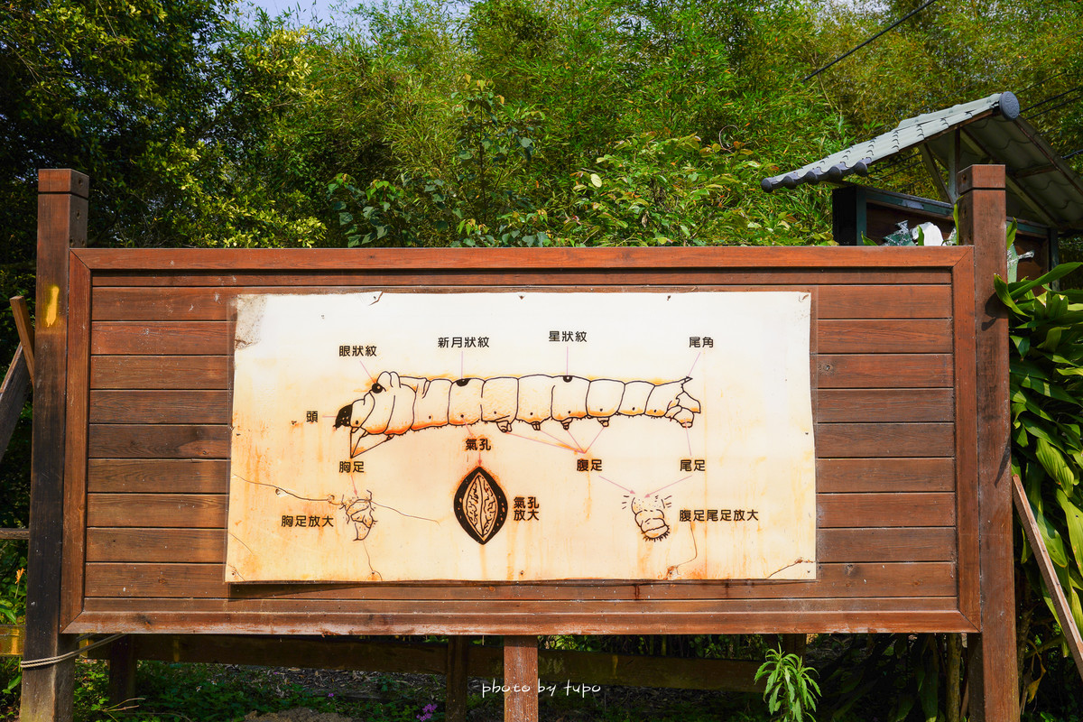 苗栗親子順遊景點:泉明蠶寶寶農場~免門票‼ 全台唯一的蠶寶寶農場 🐛觸摸蠶寶寶~ 免費蠶沙茶,直擊迷你蠶寶寶變成巨大蠶寶寶~ 蠶絲被好像棉花糖!