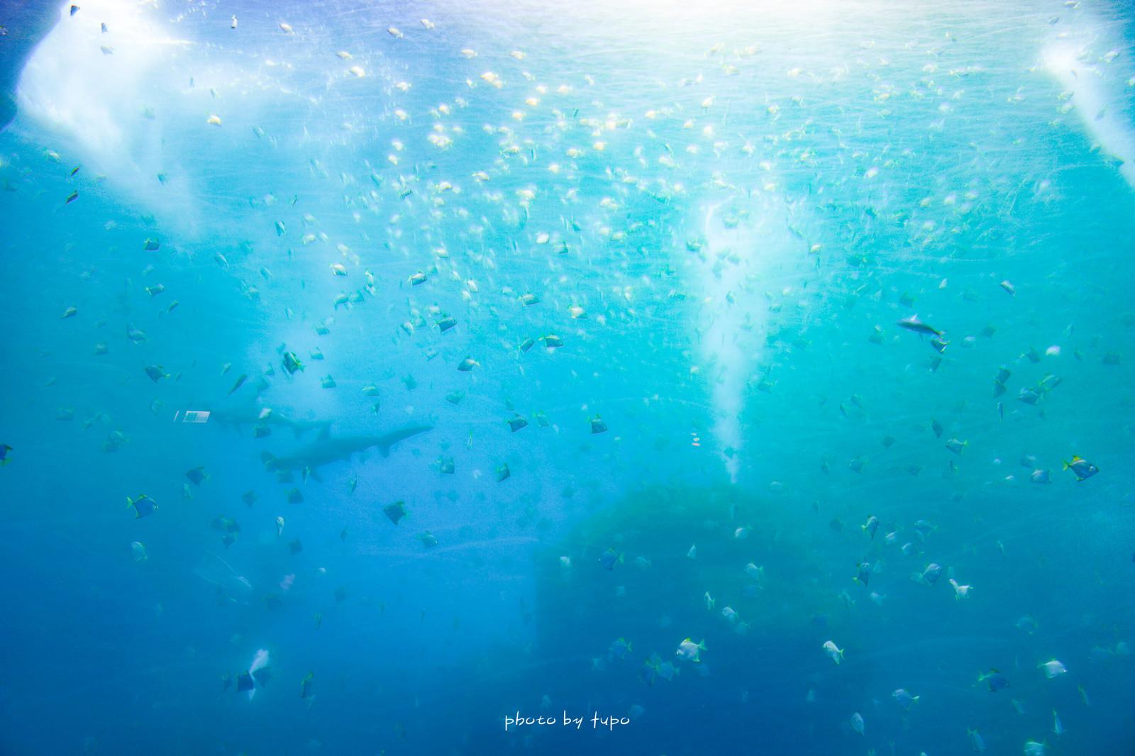 桃園新景點《 Xpark水族館(都會型水生公園):平日開放現場購票,一起來去和企鵝吃午餐吧,和湛藍水母拍照要等一小時