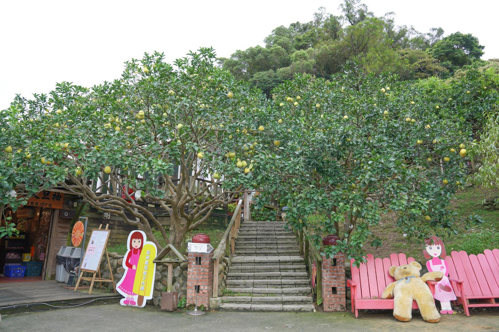 新北》八里桃樂絲森林~免門票!! 眺望山海景、柚子森林木屋、森林溜滑梯、兒童跑車賽道、沙堆通通免費玩!