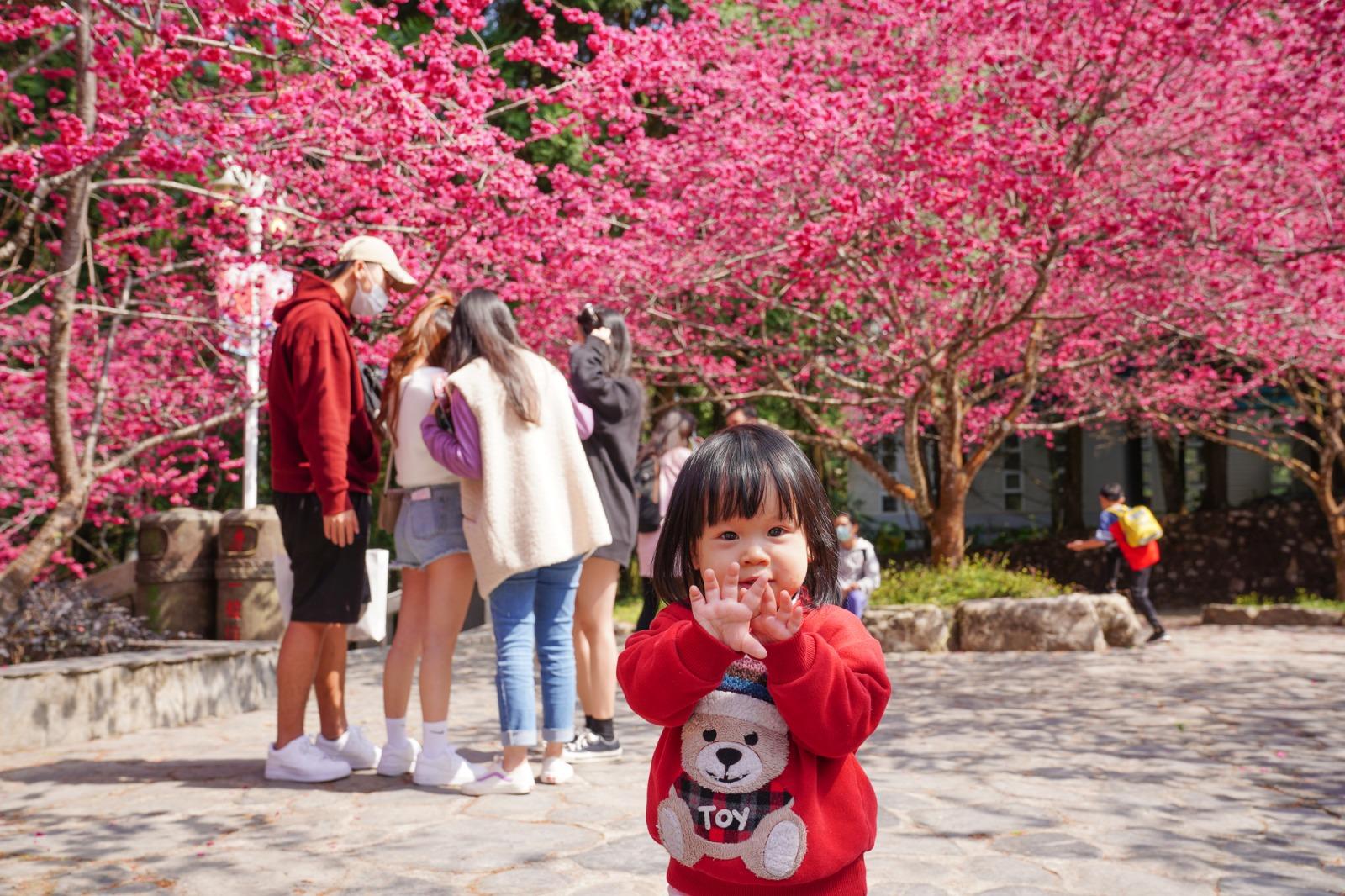 南投景點》從早玩到晚!九族文化村~櫻花季大爆發,搭乘纜車親子旅遊景點,優惠票價,九族文化村一日遊