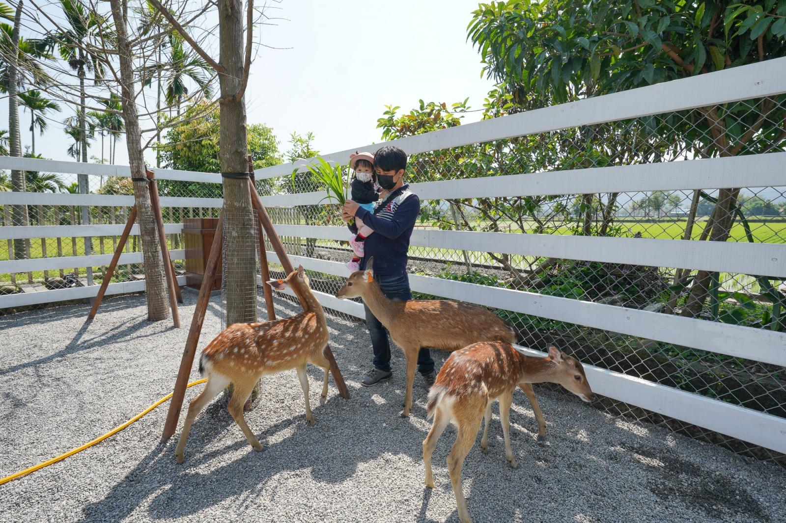 宜蘭親子農場》水豚君頂橘子!張美阿嬤農場,400坪日式庭園,穿和服餵小鹿、水豚君,還可兌換蔥油餅和雞蛋糕,適合親子同遊的景點