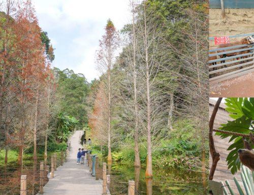 新竹親子景點》可愛動物園!綠世界生態農場,佔地70公頃的六大主題雨林生態園區,動物劇場草泥馬樹懶都超可愛~