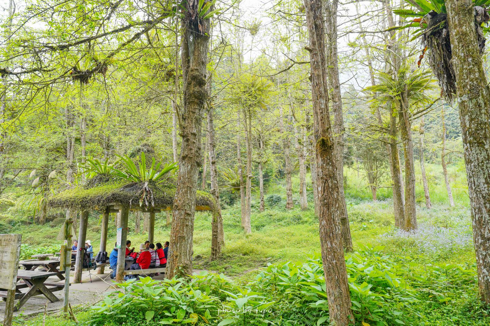 南投鹿谷景點》溪頭森林遊樂區(溪頭自然教育園區),滿滿仙氣森林園區!森林野餐區.音樂城堡.空中走廊.神木林發呆去~