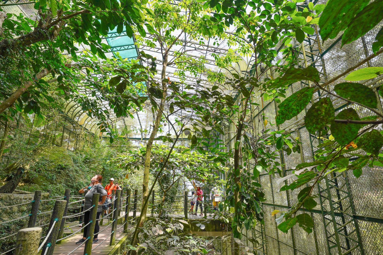 南投鹿谷景點》鳳凰谷鳥園生態園區,銅板價門票!好好玩森林溜滑梯,賞鳥,瀑布半日遊,親近大自然的森林景點