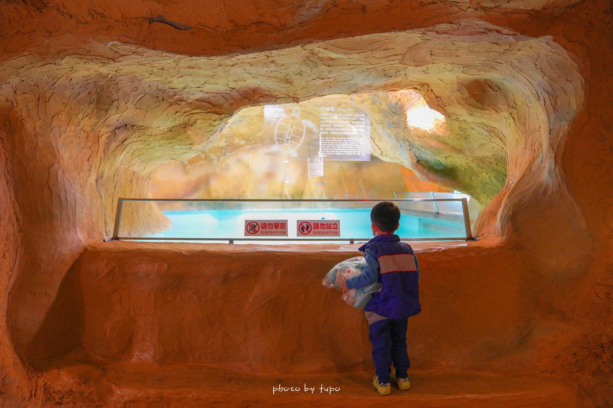 北海岸親子景點》野柳水族館一日遊!野柳海洋世界: 海豚親親、海洋劇場、海底隧道探險、生態池摸摸海星去 @小腹婆大世界