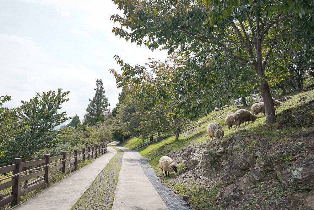 清境農場一日遊》清境農場怎麼玩?不只是餵羊咩咩,最新景點幸福秘境、青青草原、綿羊秀、馬術秀場
